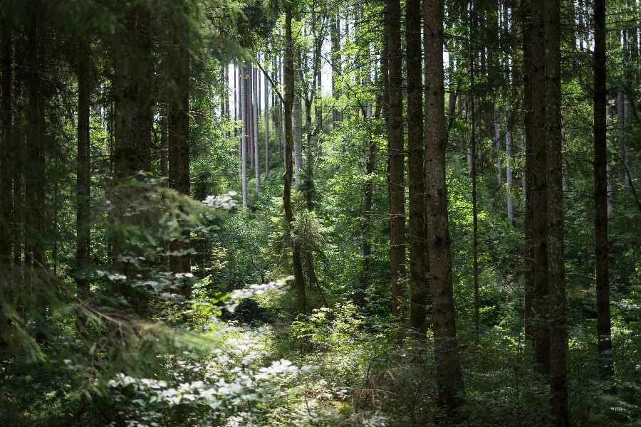 gozd-narava