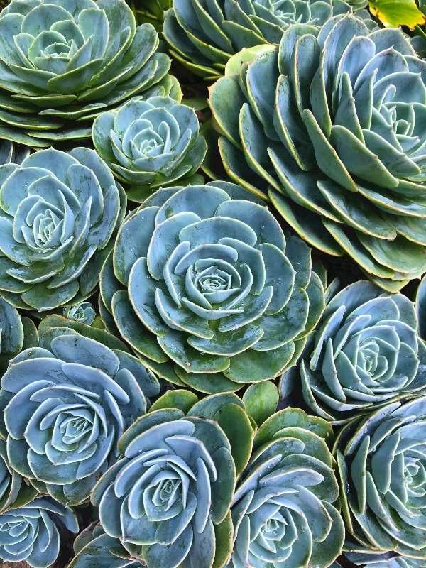 sobne-rastline-fraktalni-vzorec