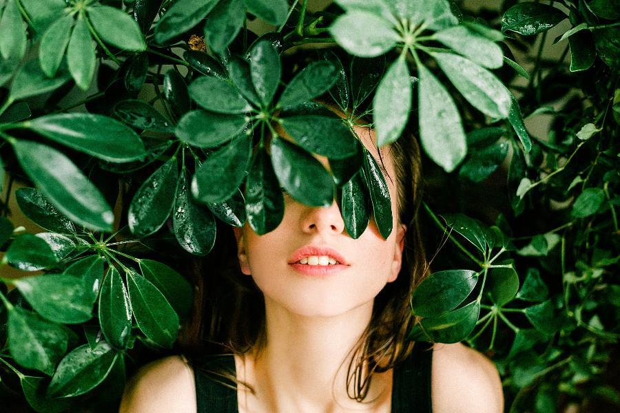 zelene-sobne-rastline-2
