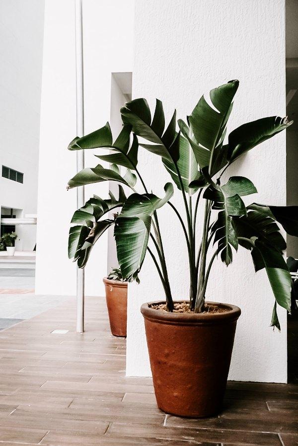 zelene-sobne-rastline